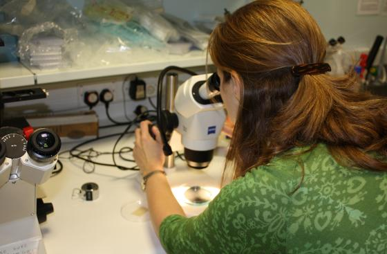 A researcher looking down a microscope at a research event