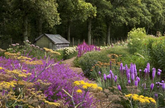 Purple and yellow flowers bordering a path leading past a shed